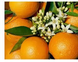 عسل بهار نارنج مرغوب