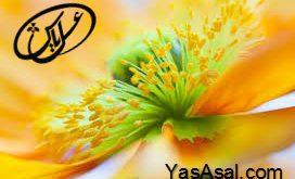 انواع گرده گل ایرانی