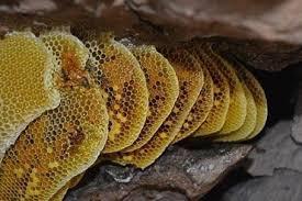 خرید فروش عسل
