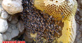 عسل طبیعی کوهی