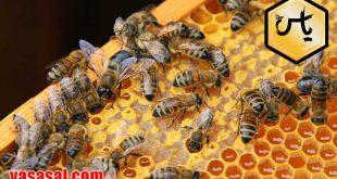 خرید عسل گشنیز