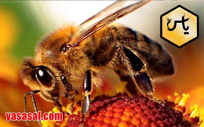 عسل طبیعی ارزان