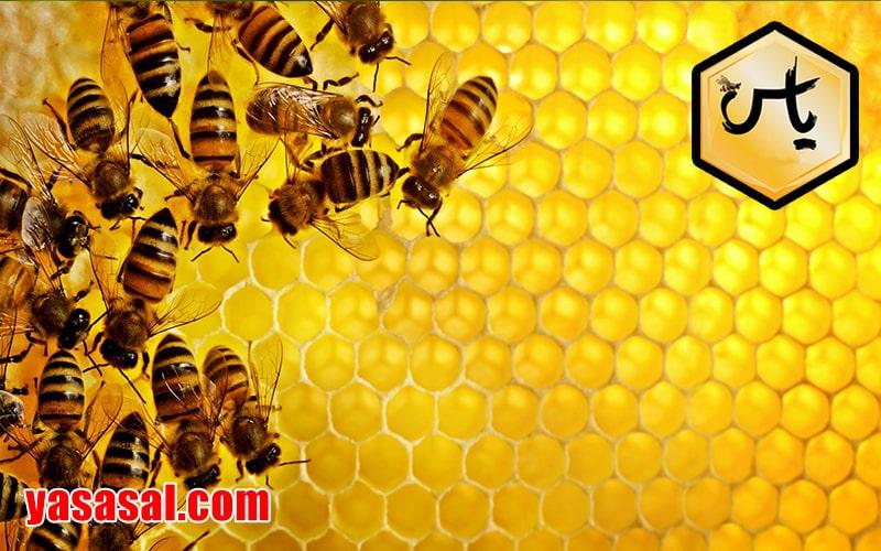 قیمت عسل انگبین