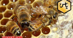 قیمت خرید عسل آویشن