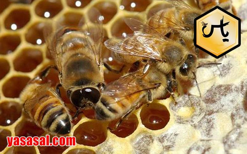 قیمت یک کیلو عسل