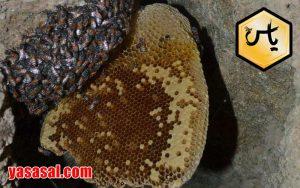 خرید عسل کوهی اصل