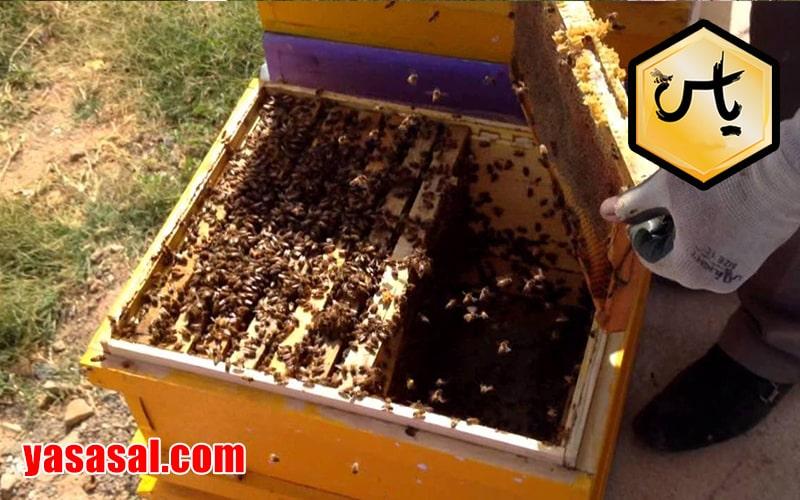 خرید ژل رویال از زنبورداران